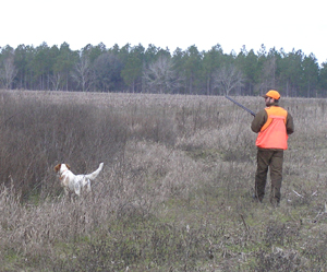 Corporate Quail Hunting Memberships