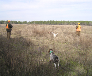 Guided and Unguided Quail Hunts