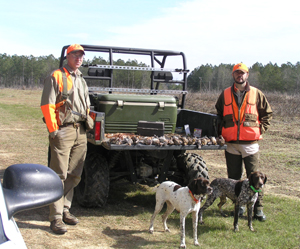 Wild Quail Hunt in Georgia